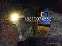 大功率野猪捕猎器客户喜获野猪真实案例