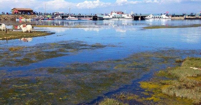 青海湖湿地.jpg