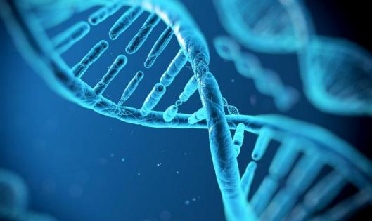 基因全息工程